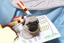 id4 pug