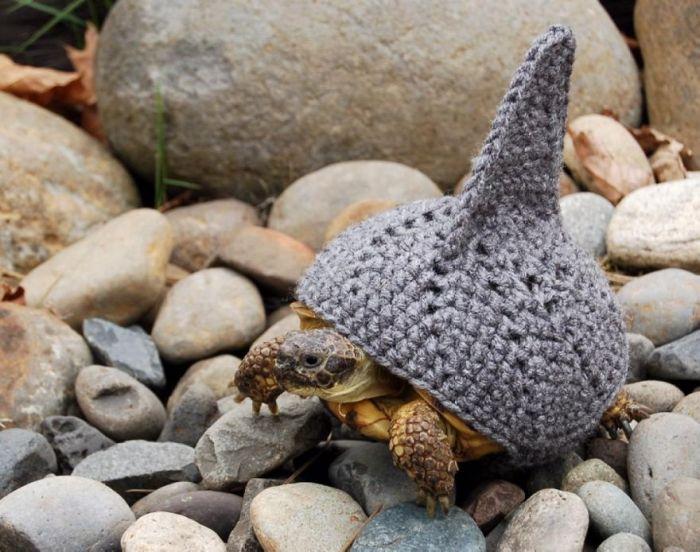 turtle shark